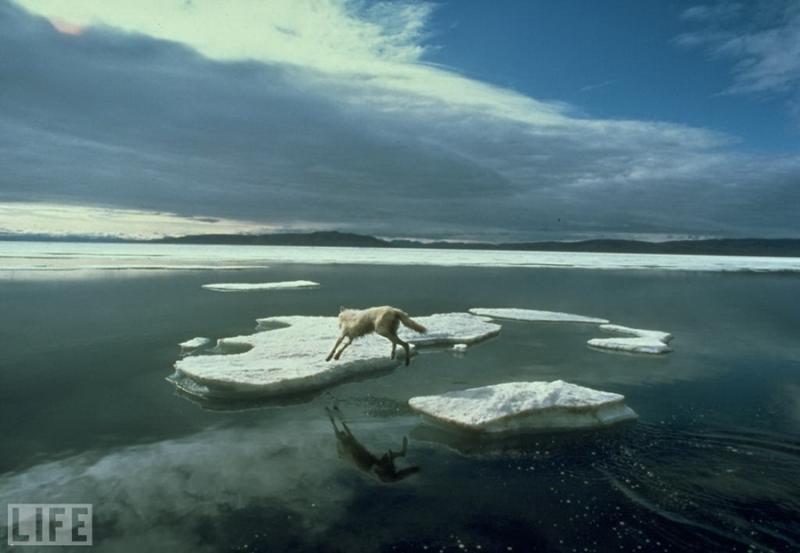 Прыжок одинокого волка, 1986